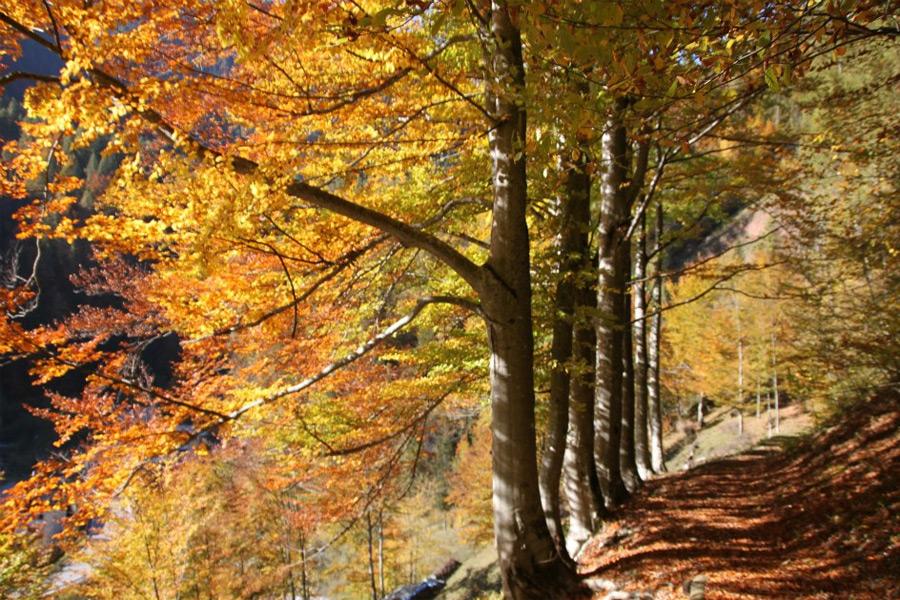 valdizoldo bosco autunno